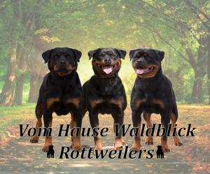 Hause Waldblich