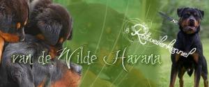 Wilde Havana